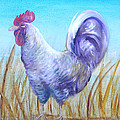 Wyandotte Rooster by Judy Bruning