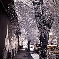 Wynwood Treet Shadow by Ellie Perla