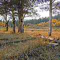 Wyoming Gold by Heather Coen