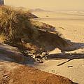 Yachats Oregon Beach by Rich Stedman