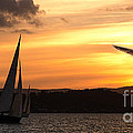 Yacht And Seagull Sunset by Geoff Childs