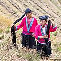 Yao Ethnic Minority Women On Rice Terrace by Matteo Colombo