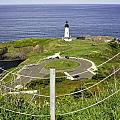 Yaquina Lighthouse From Salal Hill Trail  by Image Takers Photography LLC - Laura Morgan