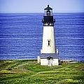 Yaquina Lighthouse From The Big Hill by Image Takers Photography LLC - Laura Morgan
