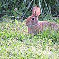 Yard Bunny 1 by Linda L Martin
