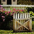 Yard by Margie Hurwich