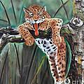 Yawning Leopard by Nava Thompson