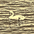 Ye Olde Swan by Shawn Dall