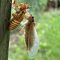 Year Of The Cicada by Tina Camacho