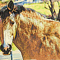 Yeller Horse by Alice Gipson