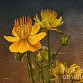Yellow Aged Floral by Deborah Benoit