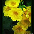 Yellow - Amarillo - Jaune by Ella Kaye Dickey