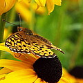 Yellow And Browns by Cheryl King