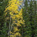 Yellow And Green by Bob Phillips
