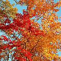 Yellow And Red by Patrick Shupert