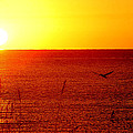 Yellow And Red Sunrise With Pelican by Michael Thomas