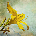 Yellow Asiatic Lilly Iv by AGeekonaBike Fine