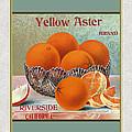 Yellow Aster Brand Oranges Vertical by Elaine Plesser