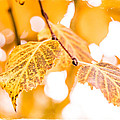 Yellow Autumn by Mick Anderson