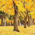Yellow Autumn Wonderland by Carol Groenen