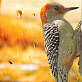 Yellow-bellied Woodpecker by Shannon Story