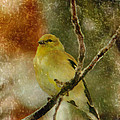 Yellow Bird by Karen Beasley