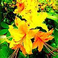 Yellow Bliss by Dancingfire Brenda Morrell