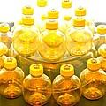 Yellow Bottle by Lorna Maza