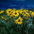 Yellow Bouquet by Charlie Choc