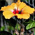 Yellow Bumble Bee Flower by Matalyn Gardner