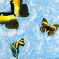 Yellow Butterflies - Spring Art By Sharon Cummings by Sharon Cummings