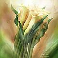 Yellow Callas by Carol Cavalaris
