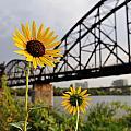 Yellow Cone Flowers And Bridge by Patrick Herrera
