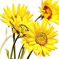 Yellow Country Wildflowers by Athena Mckinzie