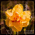 Yellow Daffodil In An Abstract Garden Painting by Omaste Witkowski