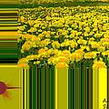 Yellow Daisies by Augusta Stylianou