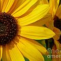 Yellow Daisy by Christine Stack