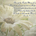 Yellow Daisy Photoart  With Verse by Debbie Portwood