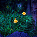 Yellow Day Lily At Night by Cindy Singleton