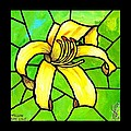 Yellow Day Lily by Jim Harris