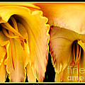Yellow Daylily Abstract by Rose Santuci-Sofranko
