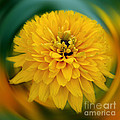Yellow Delight by Smilin Eyes  Treasures