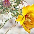 Yellow Desert Flower by K D Graves
