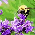 Yellow Enjoying Lavender by Heidi Manly