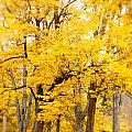 Yellow Fall by Erin Johnson