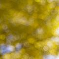 Yellow Fall Foliage Blurred Background by Jit Lim