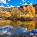 Yellow Fall Reflections by Robert Bales