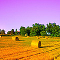 Yellow Field by Dany Lison