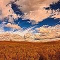 Yellow Field Dramatic Sky by Diana Shuter