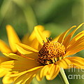 Yellow Flower by Amanda Mohler